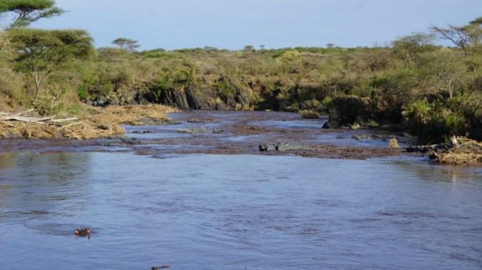 Serengeti - river