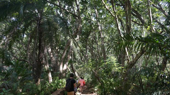 Zanzibar - jozani forest1