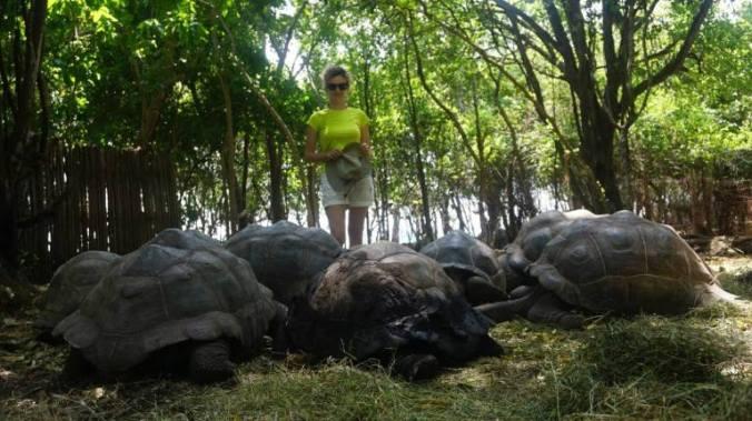 Zanzibar - prison island turtles
