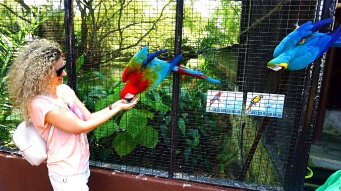 Penang - bird park