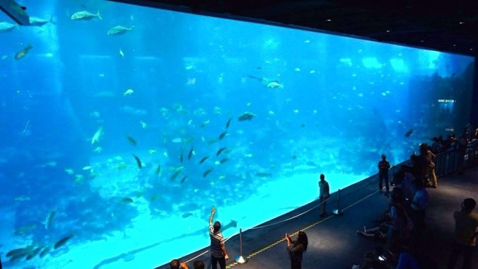 Singapore - Sentosa aquarium