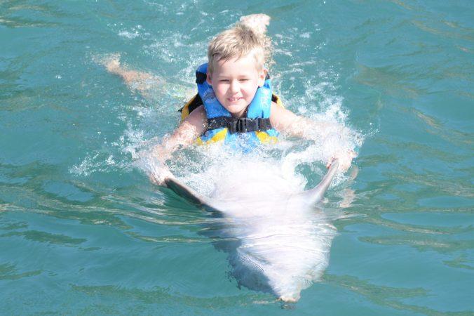 St. Kitts si Nevis - dolphin swim1