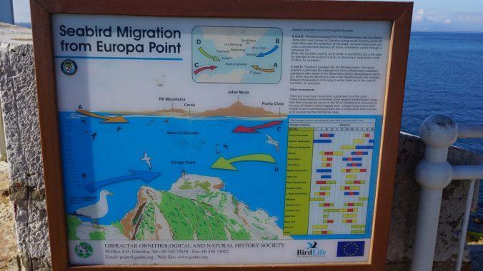 Gibraltar - europe point4