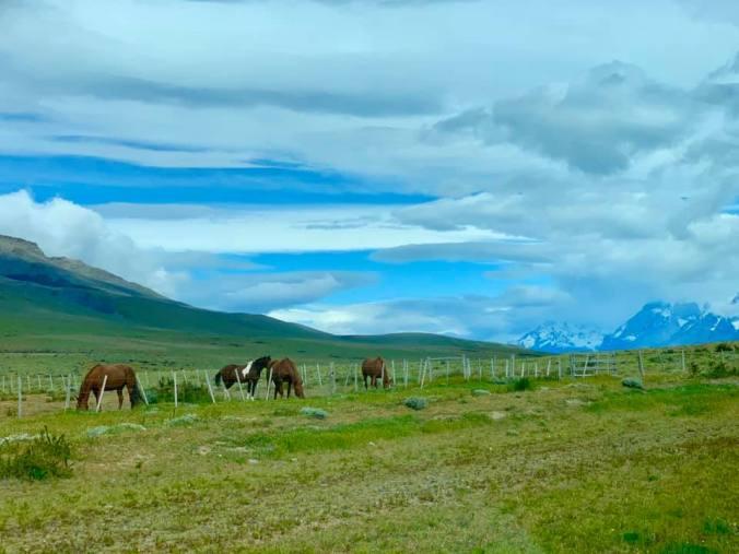 Patagonia - Torres del Paine7
