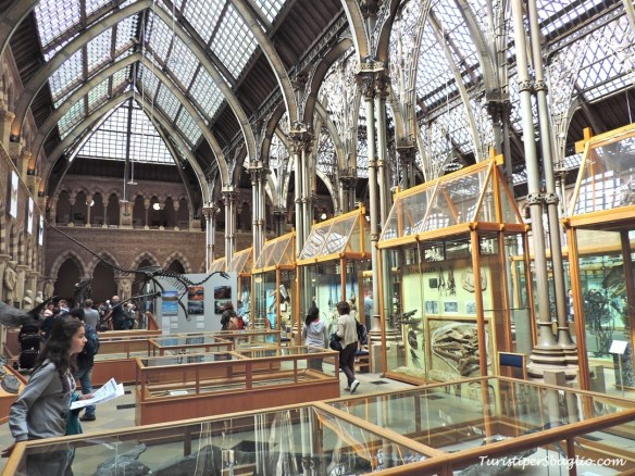 UK 2014 - Oxford - Museum of Natural History - 09_new