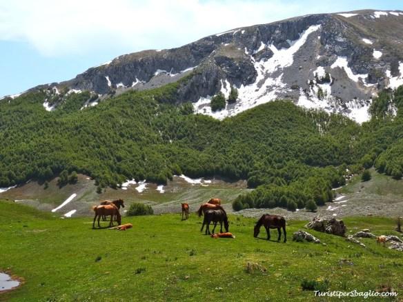 Parco Nazionale del Pollino - 09