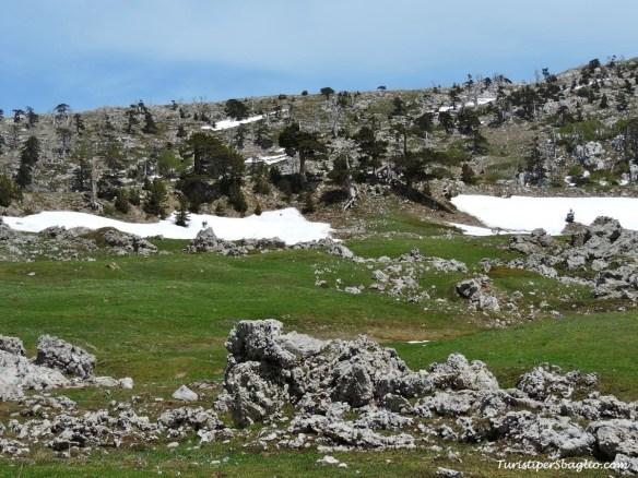 Parco Nazionale del Pollino - 13