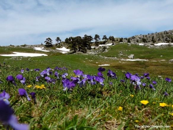 Parco Nazionale del Pollino - 14