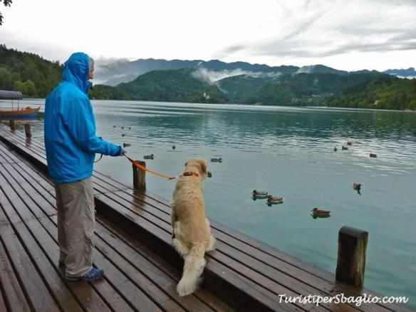 Lago di Bled and Bohinj Slovenia - 23