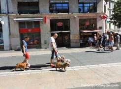 Montpellier - 05_new