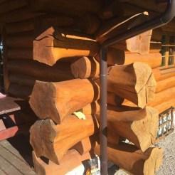 Bear's log IP - 18