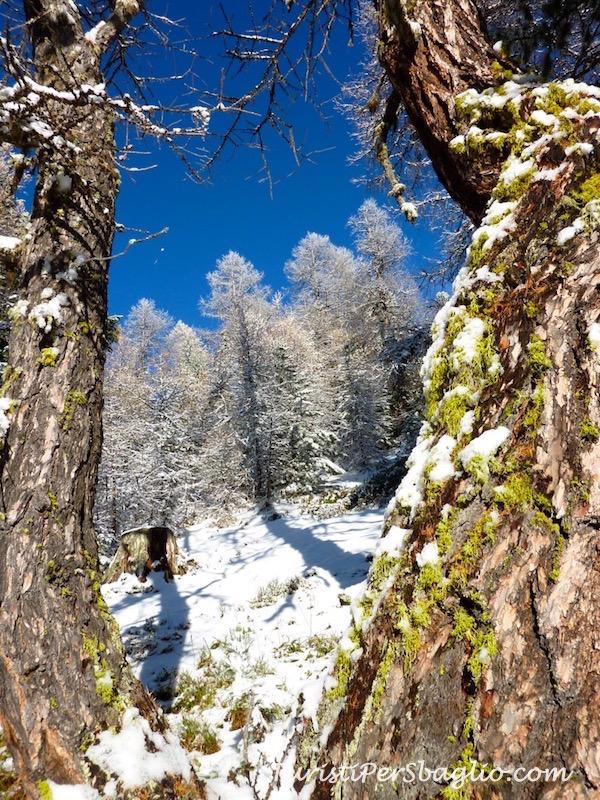chandolin-svizzera-vallese-sentiero-per-le-ciaspole-12_new