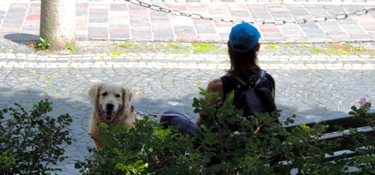Viaggiare con il cane, piccole accortezze e grandi soddisfazioni!