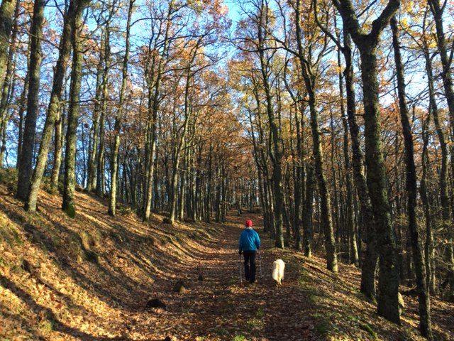 Turisti per Sbaglio camminando per boschi