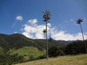 15 Kolumbija DA Valle de Cocora (3)