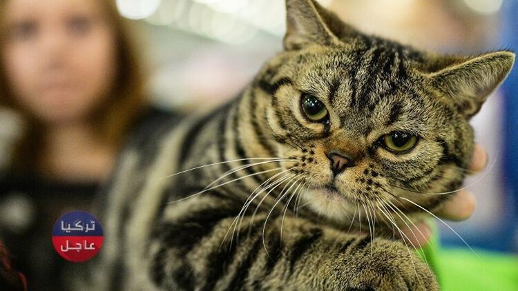 امرأة مسنة ينتهي بها المطاف في بطون 7 قطط كانت تربيها