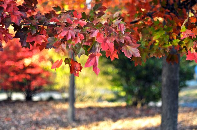 grant_park_fall_leaves