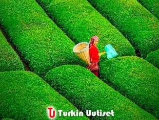 Turkkilainen tee