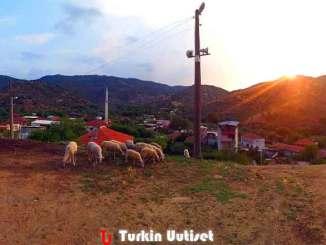 Cincin kylä