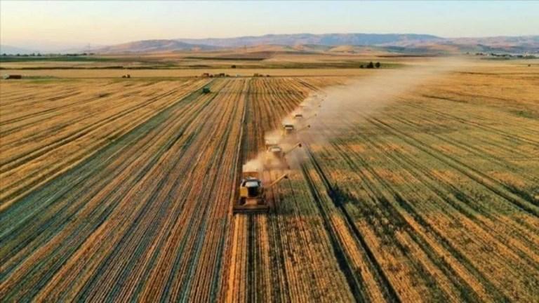 Agricultura în Turcia