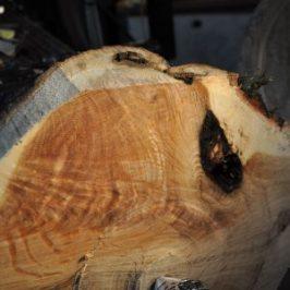 crotch figure in oak