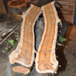 yew log after sawing