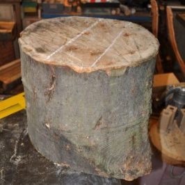 sycamore log marked for sawing