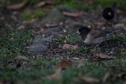 Birds-20