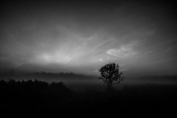 Field at dawn