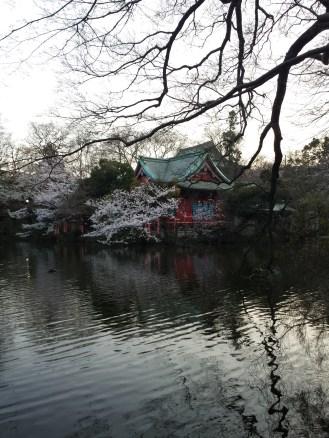 Blossoms at the Benzaiten Shrine inside Inokashira Park in Kichijoji, Japan.
