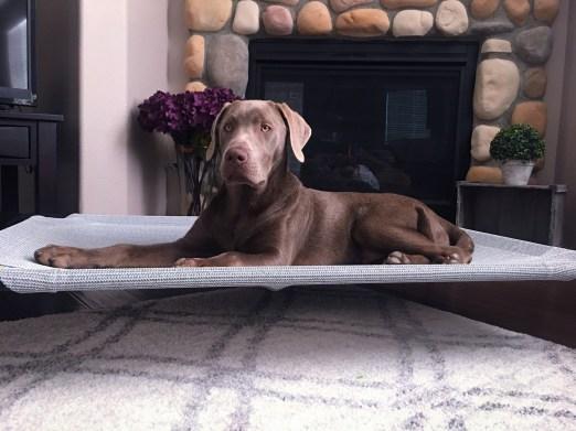 Holistic Dog Care | Coolaroo Elevated Pet Bed
