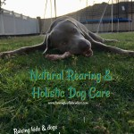 What is Natural Rearing for Dogs?