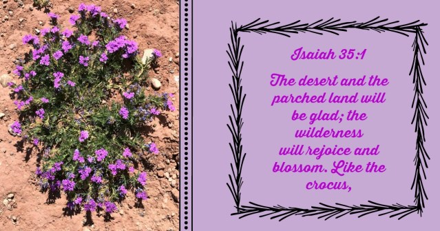A Drive through the desert Isaiah 35:1 Blog by Yvonne