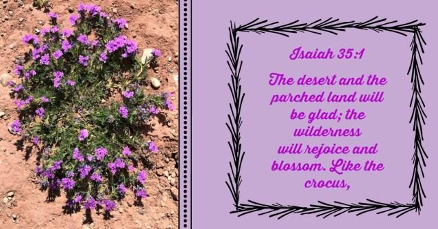 A Drive through the desert Isaiah 35:1 Blog by Yvonne