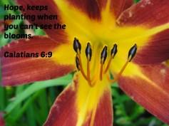 Hope Blooms!