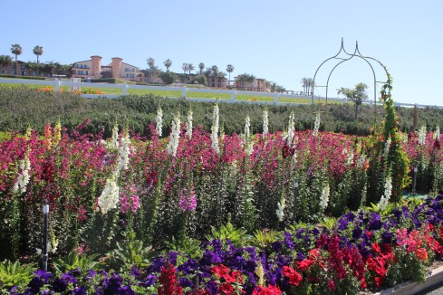 Petunias and lupins