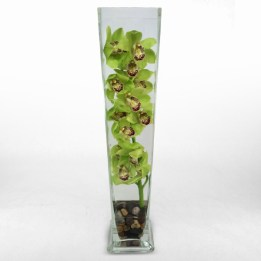 Cymbidium Orchid in Tall Glass Vase with Rocks