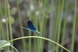 Dragonfly at Cascade de Pennafort