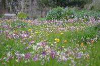 Wildflowers in the gardens of Pena Palace