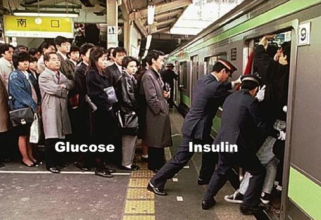 insuliiniresistenssi_5