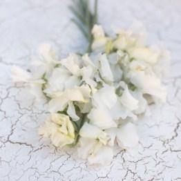 Floret_Sweet-Pea_White-Supreme-2-550x550