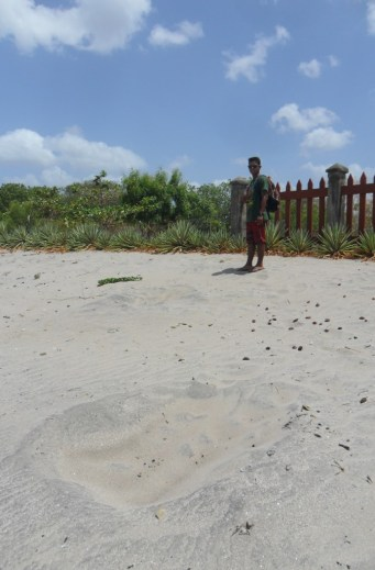 only a pro will recognise the turtle nest here!