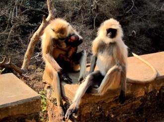 Proud Parents, Rameshwaram Temple, Bundi