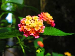 Hoi An Flower