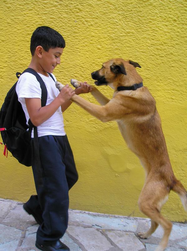 Dancing Dog Photo