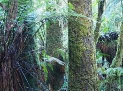 Moss Everywhere