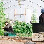 gardening business