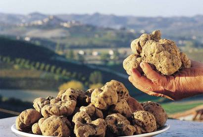 Here it is, the elusive tartufo bianco (white truffle) di San Miniato