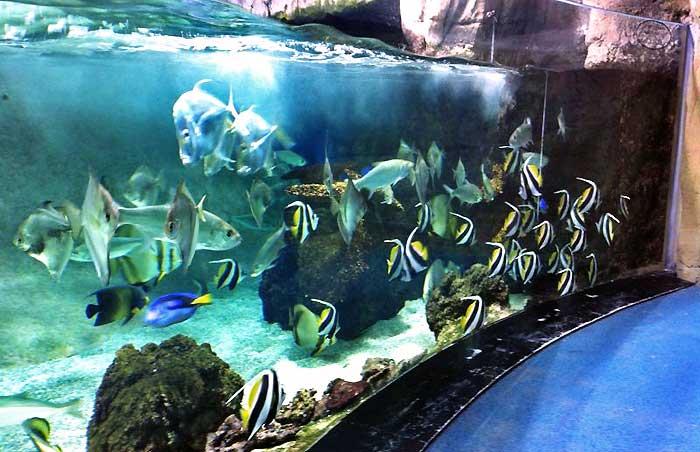 En el Acuario de Gijón, inaugurado en 2006, viven unas 500 especies distintas