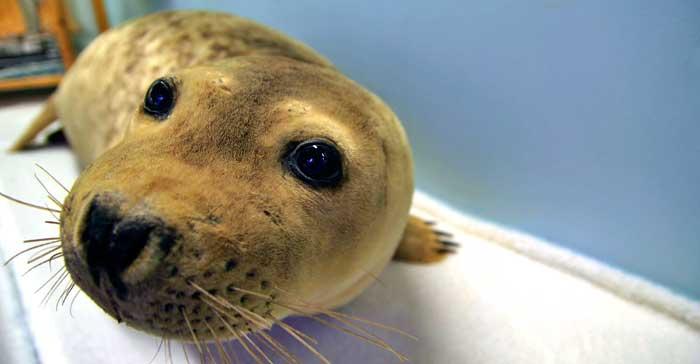 En el Museo Polar de Tromsø hay varios espacios dedicados a las focas